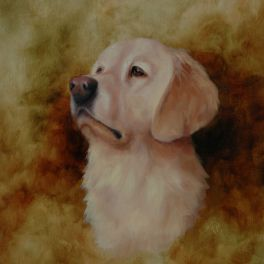 "Golden Retriever, 11""x14"" oil painting. Not for sale."