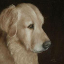 "Golden Retriever, 8""x10"" oil painting. Not for sale."