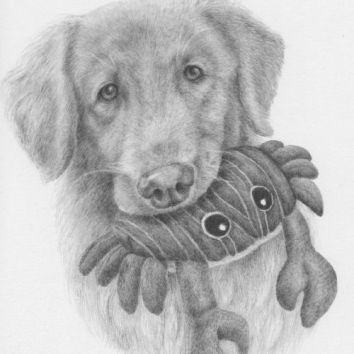 Milo, graphite. Memorial portrait, not for sale.
