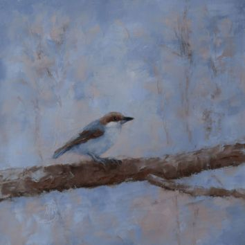 "The brown-headed nuthatch is a small songbird found in pine forests throughout the Southeastern United States. Their numbers are declining. It is a companion piece to my other Brown-Headed Nuthatch painting. 16""x16"" original oil on canvas. You can also buy this image printed on home décor items such as canvas prints and even pillows and coasters. See the Shop tab for more details."