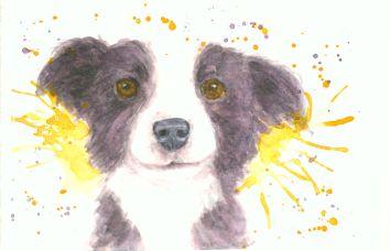 Border Collie, watercolor