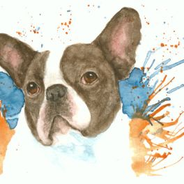 Boston Terrier, watercolor