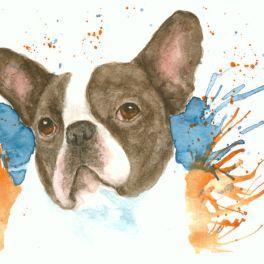 Boston Terrier, watercolor