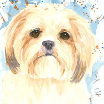 Lhasa Apso, watercolor