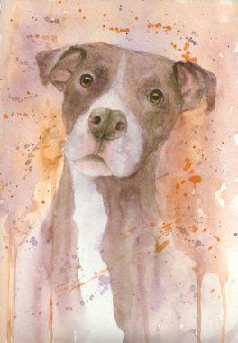 Pretty Pittie, watercolor