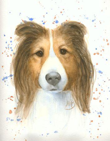 Shetland Sheepdog, watercolor